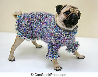cão, suéter