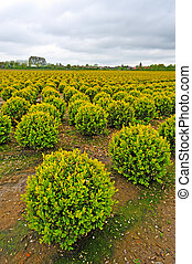 Bushes - Farmstead on Land Reclaimed from the See,...