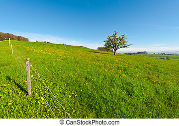 Electric Fence - Flowering Tree on the Pasture Surrounded by...