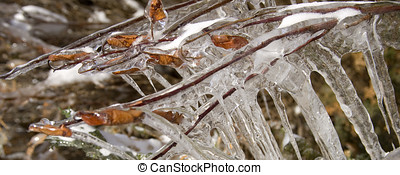 Frozen leaves and ice shapes - A panormaic image of frozen...