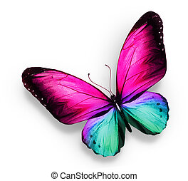 Pink turquoise butterfly , isolated on white