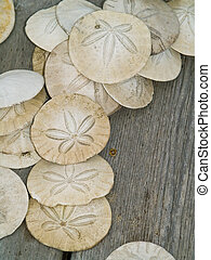 Sand Dollars on a Wooden Board - A bunch of sand dollars in...