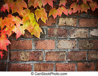 Ivy over brick wall - Poison ivy in autumn Background...