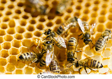 Beekeeping - Bees working on honeycomb.