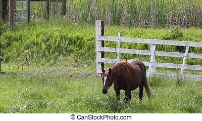 Horse in Deep Grass