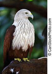 Falcon in the wild