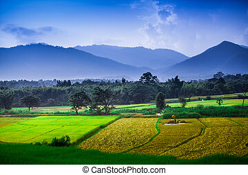 Rice terraced on mountain