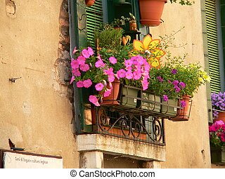 window box containing yellow and pink flowers in venice