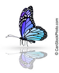 Blue butterfly , isolated on white mirror background