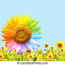 Sunflower painted in different colors