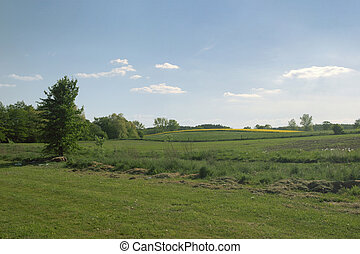 Fields and meadows - Summer lanscape with calm blue sky, a...