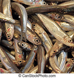 close-up of anchovies on market, Venice, Italy, Europe