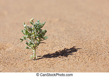 Desert plant in sand with tiny yellow flower