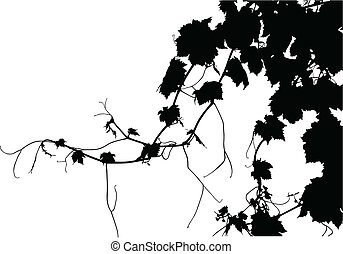 Grape Vine - A textured grape vine vectorized. 1/2 of copy...