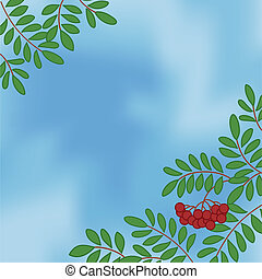 Background with rowanberry on sky - Background with...