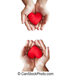hand and red heart - hands hold a red heart on white...