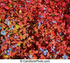 FLOWERING BUSH IN FALL - flowering bush in autumn, very...