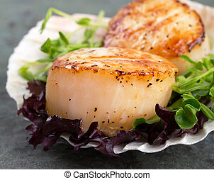Seared scallops on lettuce - Studio closeup of seared...