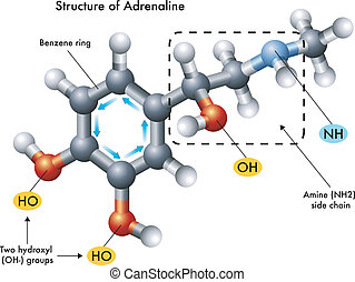 structure of adrenaline - medical illustration of the...