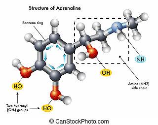 estructura, adrenalina