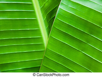 banana leaves natural green background