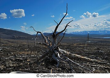 Deforestation - Environmental problems. Consequences of an...