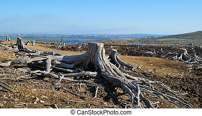 Dead stumps - Environmental problems Consequences of an acid...