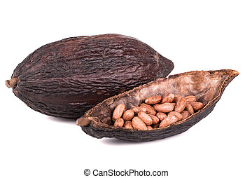 cocoa fruit and ripe on a white background