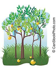 jugoso, frutas, manzana, jardín