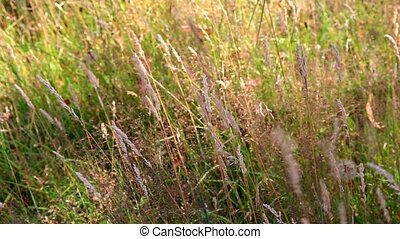 Rippling grass background
