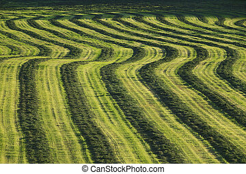 Field of harvested crop.