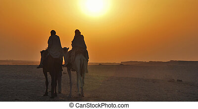 rider on camel at sunset panorama