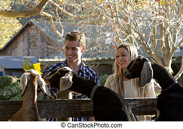 Couple at Petting Zoo - A young couple on a date at a...