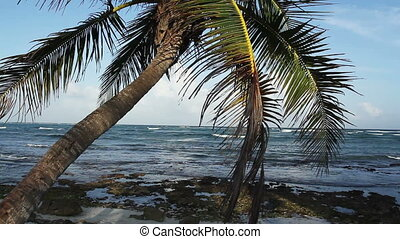 a perfect paradise beach with a lone palm tree, mexican...