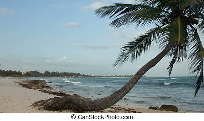 timelapse of a perfect paradise beach with a lone palm tree,...
