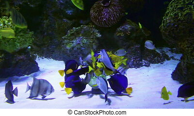 tropical fish feeding underwater