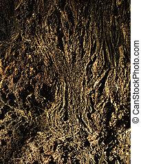 ruff tree bark