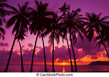 Palm trees silhouette at sunset on tropical island, Thailand