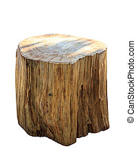 Stump isolate on white background