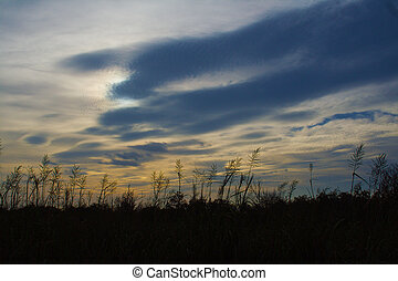 Sunset and reeds - Sunset in Virginia beach with reed...
