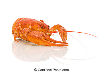 crayfish closeup on white background - boiled crawfish...
