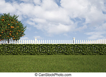 Garden with fence and hedge - Garden with white fence and...