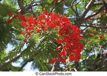 botanica, fiamma, albero