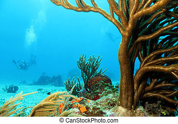 Corals with Divers in the Background, Cozumel, Mexico