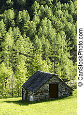 Mountain hut - mountain hut near a forest of larch,...