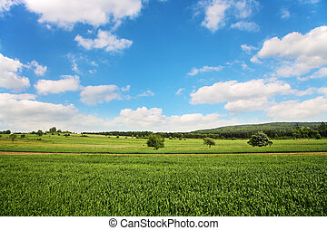 Nature, Landscape - Field of wheat and perfect blue sky