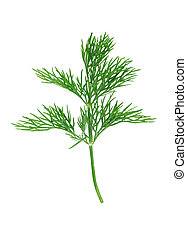 dill - fresh dill on white background
