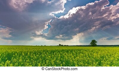 Rape field and dramatic sky, time-lapse