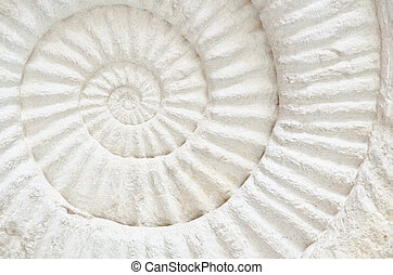 Ammonite prehistoric fossil - Closeup of an ammonite...