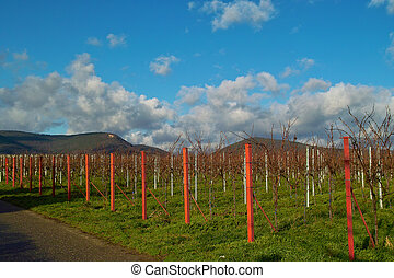Wineyards in autumn